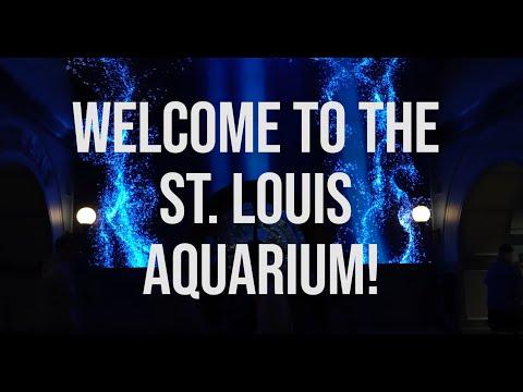 Touring The St. Louis Aquarium At Union Station!