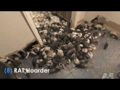 Hoarders rat man