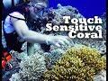 MelodeeSea - Scuba Diving Rota - RARE touch-sensitive color reacting coral