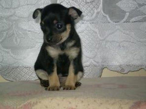 Купить недорого прочее для собак с доставкой по москве и мо в интернет магазине бетховен.