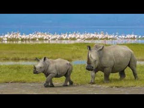 Park Narodowy Ngorongoro - odc.24