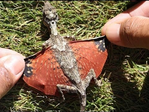 Real Baby Dragon Found In Indonesia Youtube