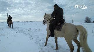 какую лошадь выбрать для Хаджа?