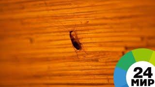 Многоквартирный дом в Казани захватили тараканы - МИР 24