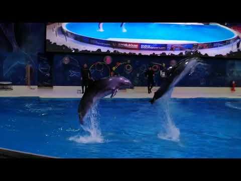 Dolphin show Vlog Dubai |  Dubai dolphin show | fun time in Dubai creek park
