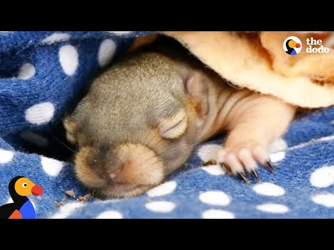 Mom Squirrel Looking for Fallen Baby Gets Help From Woman   The Dodo