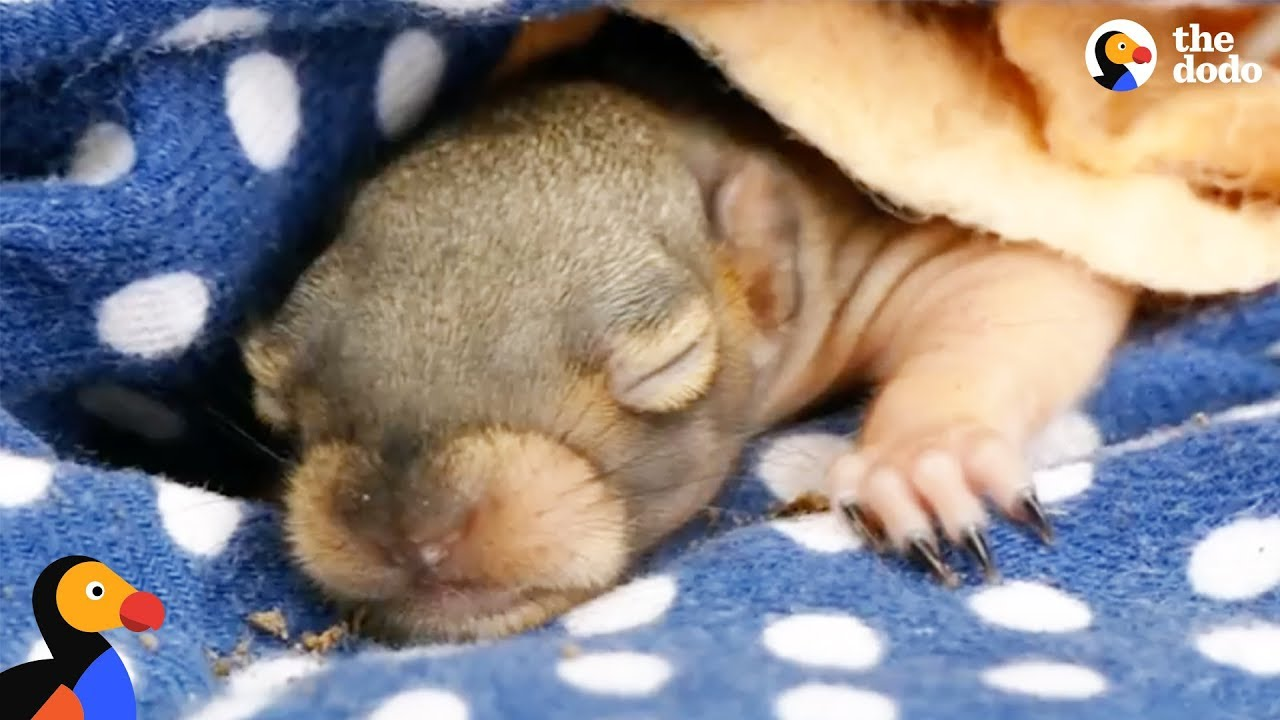 Mom Squirrel Looking for Fallen Baby Gets Help From Woman