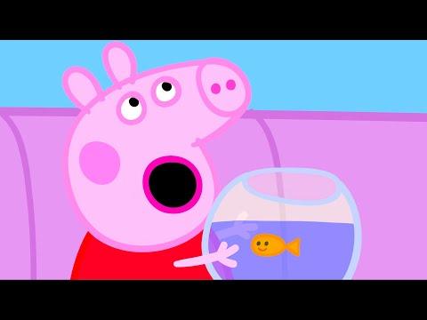 Peppa Pig 🐠 Balık Goldie 🚌 Derleme En Ilginç ⭐ Programının En Iyi Bölümleri