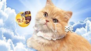 간식이 너무 맛있어서 눈물 흘리는 고양이... | 김메주와고양이들