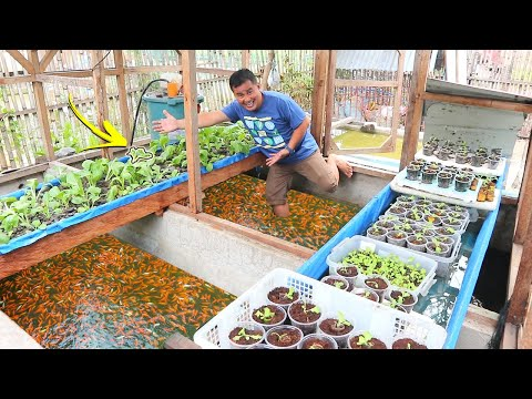 Inside In My Ornamental Fish Farm│Daily Rourine
