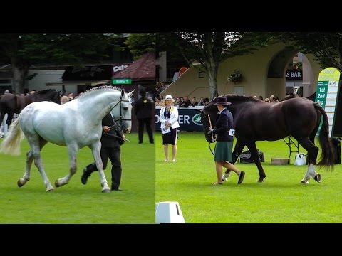Dublin Horse Show RID Stallion Parade RDS 2015