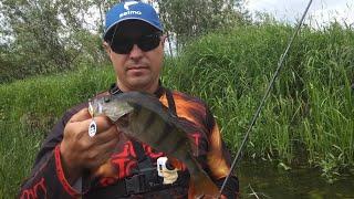 Ловля и Копчение Окуня на природе. Рыбалка с ночевкой. Часть 1