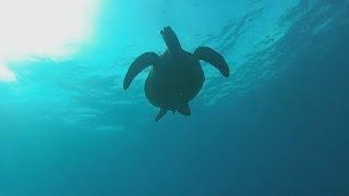 SCUBA Trip to Apo Island Remaster - Philippines Expat