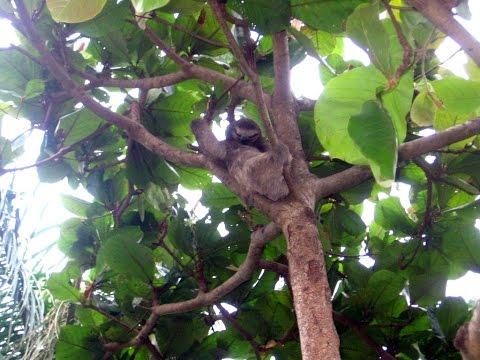 Costa Rica-mangrove tour, sloth & scarlet macaw