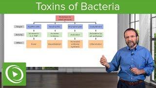 Bacteria Toxins:  Exotoxins, Endotoxins & Membrane-Damaging Toxins – Microbiology | Lecturio