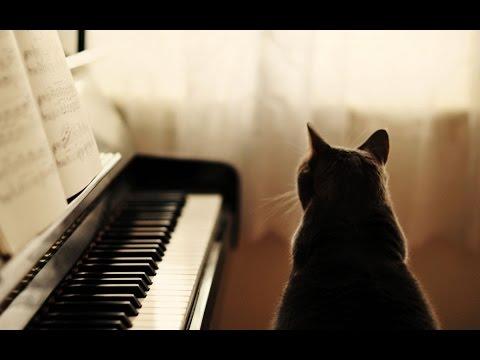 Musica Relajante De Piano - Musica Para Dormir, Relajarse, Estudiar Y Leer Un Libro