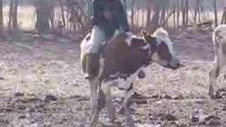 Ride a Cow