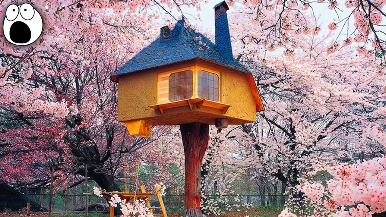 20 coolest treehouses in the world