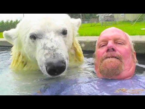 Единственный человек в мире, который плавает с белым медведем. Человек-гризли