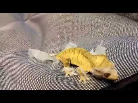 Huge!!! Reptile room update July 2016 post reptile super show San Diego