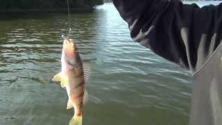 Daiwa Ultralight Fishing Pole Review