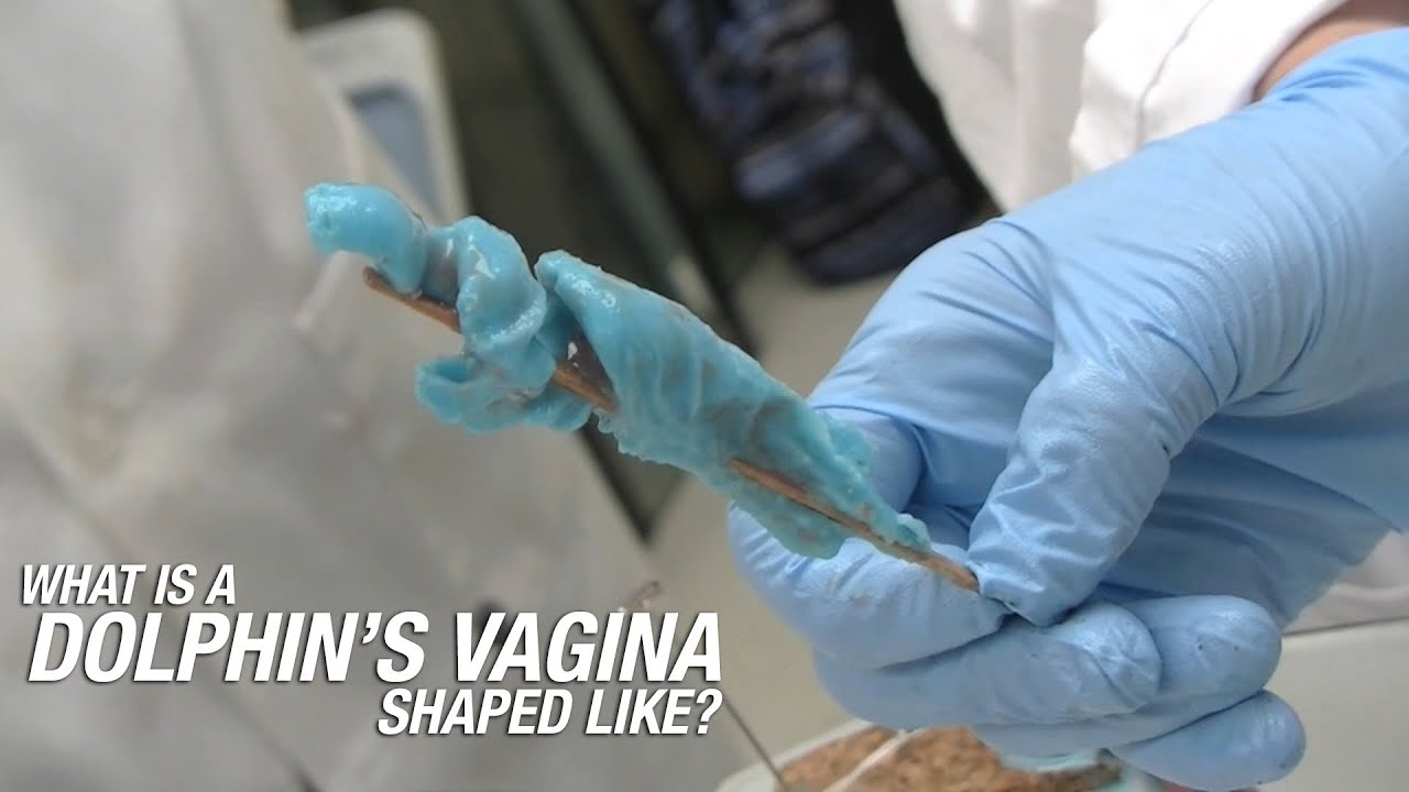 What Is A Dolphins Vagina Shaped Like - Youtube-1645