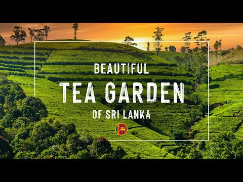 🇱🇰Sri Lanka`s Beautiful Tea Garden| Tea Plantation & Rambuda waterfall | Nuwara Eliya