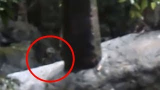 5 Unknown Creatures Caught On Camera & Spotted In Real Life!