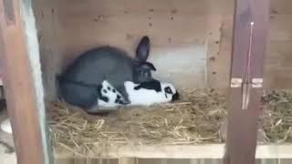 порно кролики