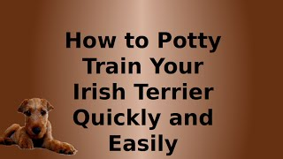 How to Potty Train Your Irish Terrier Quickly and Easily