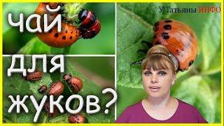 видео Современные средства борьбы с колорадским жуком