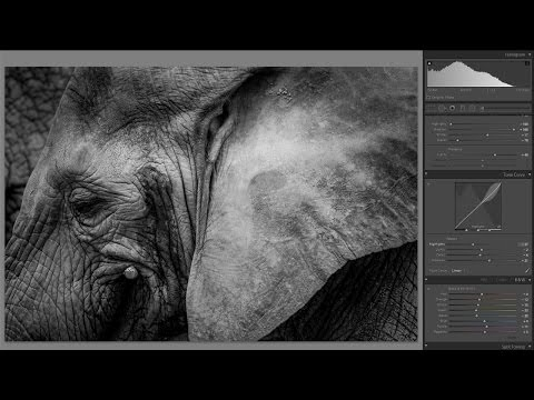 How To Edit Wildlife Photos in Lightroom Tutorial - Lightroom 5 min Quick Edit #017