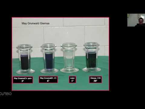 Nasal Citology: A New Diagnostic Tool (Alberto Macchi) | Naso Sano ADHER-ENT 1st-15th