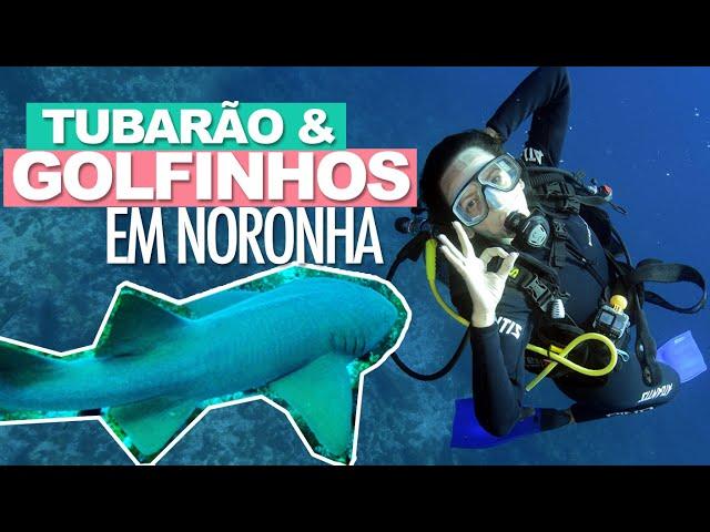 MERGULHO EM FERNANDO DE NORONHA: TUBARÃO e GOLFINHO + Morro do Piquinho | Prefiro Viajar