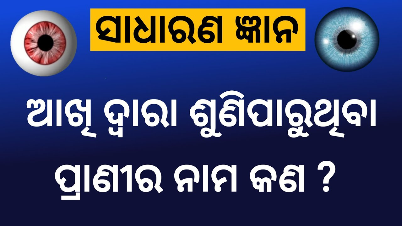 odia General knowledge question answer || odia gk mcq || odia funny question video | odia khati maza