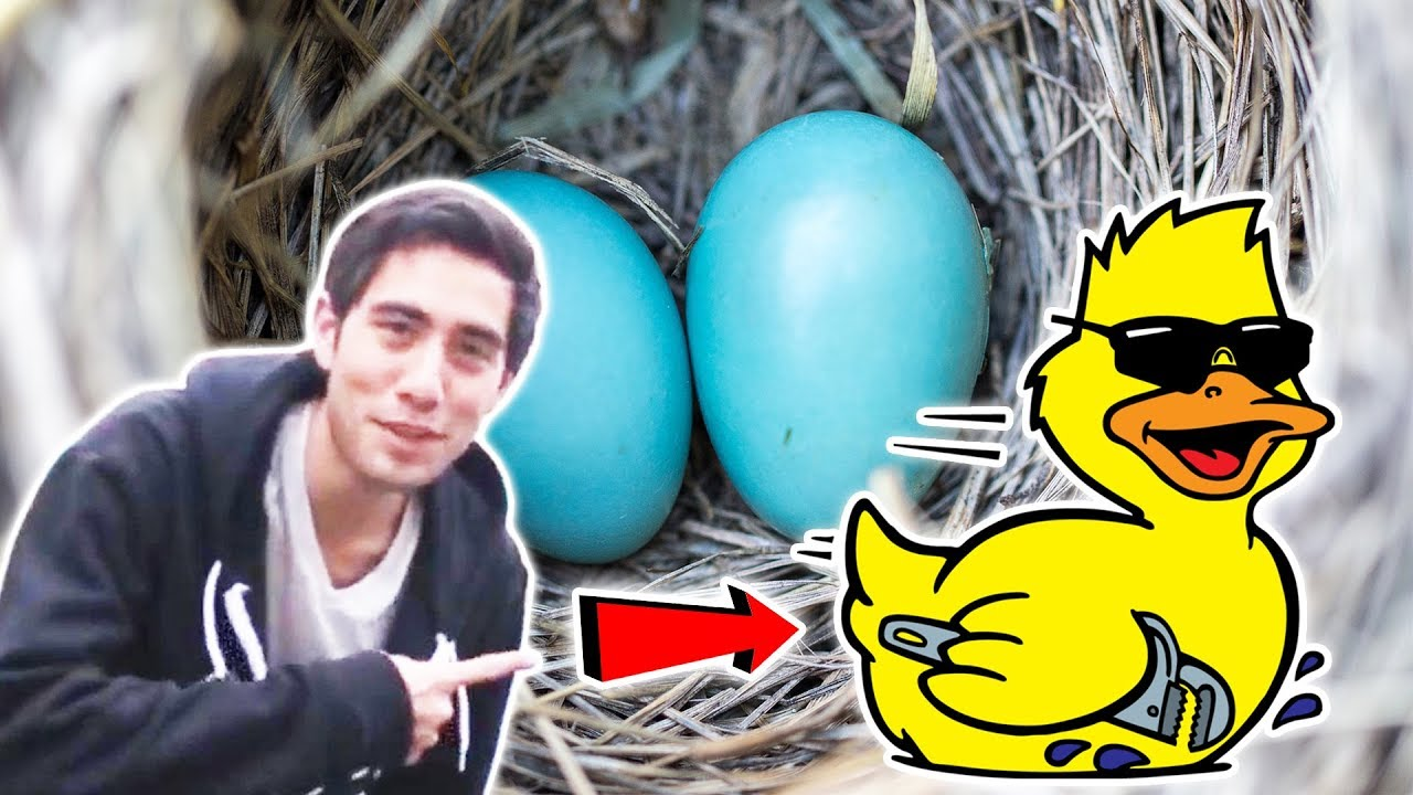 BEST ZACH KING MAGIC TRICKS ANIMALS Vine | New Awesome Magic Trick of Zach King Show Ever