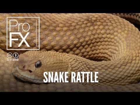 Snake rattle sound effect | ProFX (Sound, Sound Effects, Free Sound Effects)