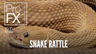 Snake rattle sound effect | ProFX (Sound, Sound Effects, Free Sound Effects)