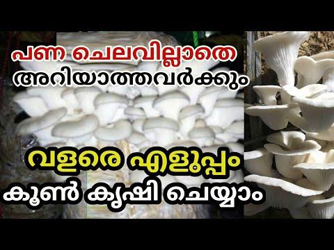 Mushroom Cultivation Simple Way Malayalam കൂൺ കൃഷി