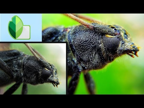 Macro Photography Tutorial: How To Edit Macro Photo By Using Snapseed On Android