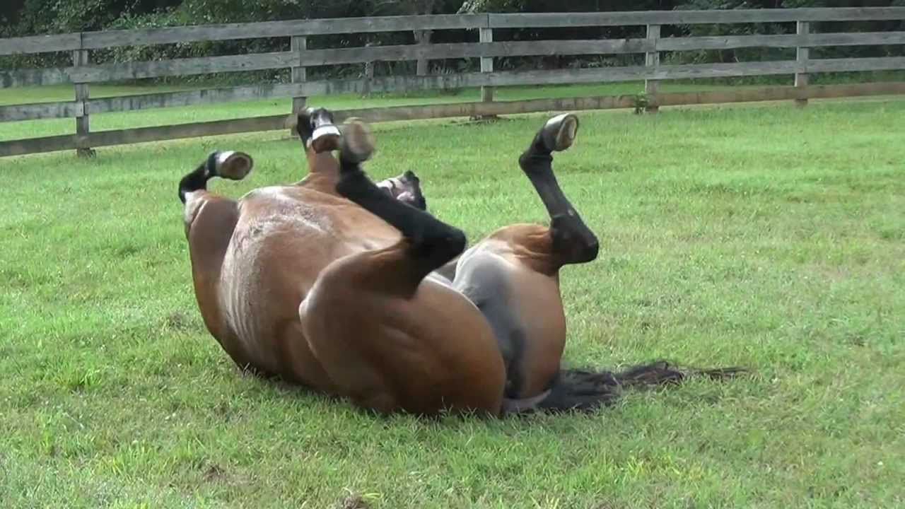 my happy horse lindy rolling in the grass youtube