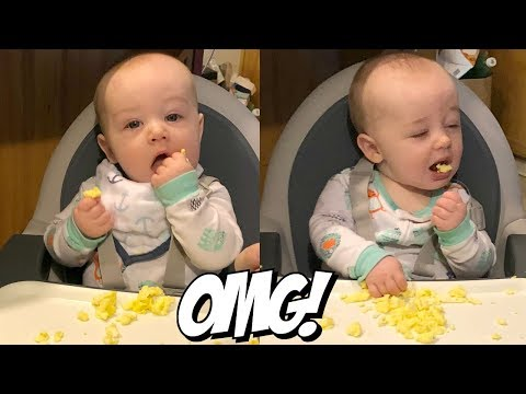 Baby Led Weaning Eggs! 6 Month Old Eating Scrambled Eggs