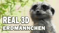 Erdmännchen - Tier-Dokumentation für Kinder, in voller Länge, ganzer Film, deutsch) Kinderfilme
