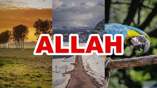 Zikr Allah الله Cure To Stress And Depression Peace Of Mind One Hour Long Dhikr