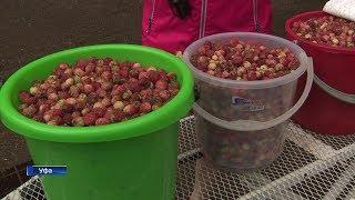 В Башкирии подорожали ягоды и подешевело молоко