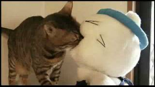 映画『猫ラーメン大将』の予告編です。 11月29日(土)より公開 そにし...