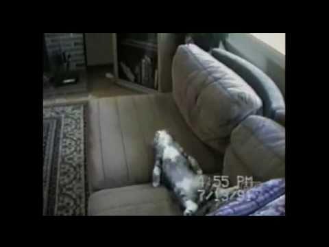 Cat Park (Americas Funniest Home Videos / AFV)
