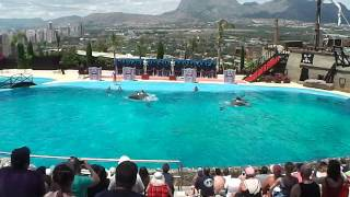 Mundomar Dolphin Show June 2013 Benidorm Spain