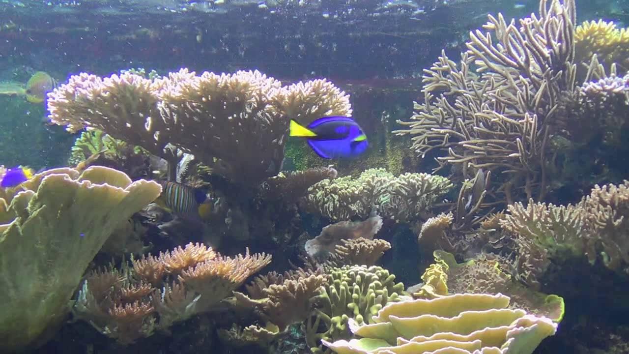 london zoo aquarium youtube. Black Bedroom Furniture Sets. Home Design Ideas