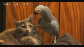 Приколы с Котами - Смешные коты и кошки 2017 -- Смешное Видео
